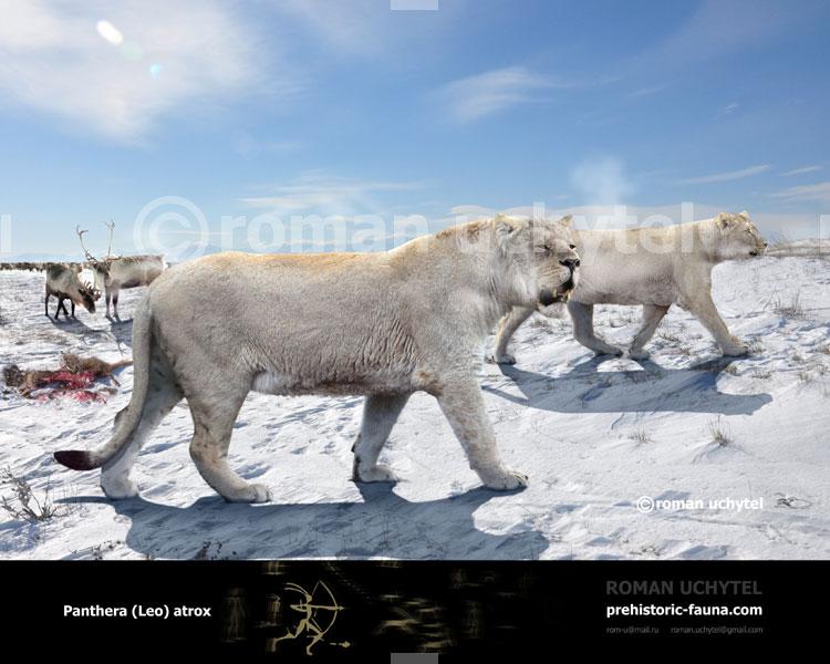 American Lion V Polar Bear Carnivora