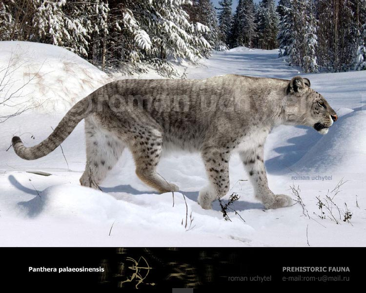 Félins éteints - Page 2 Panthera-palaeosinensis