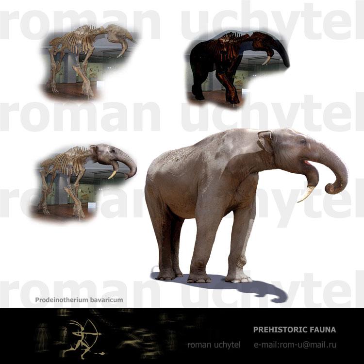 Prodeinotherium bavaricum - Bestiary - Доисторические ...